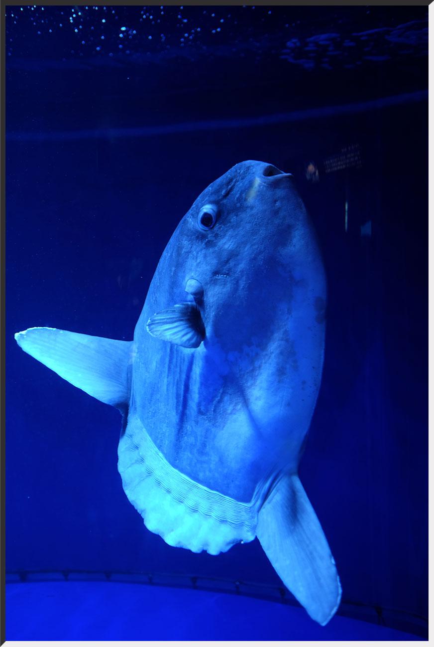 aquarium_140404_05.jpg