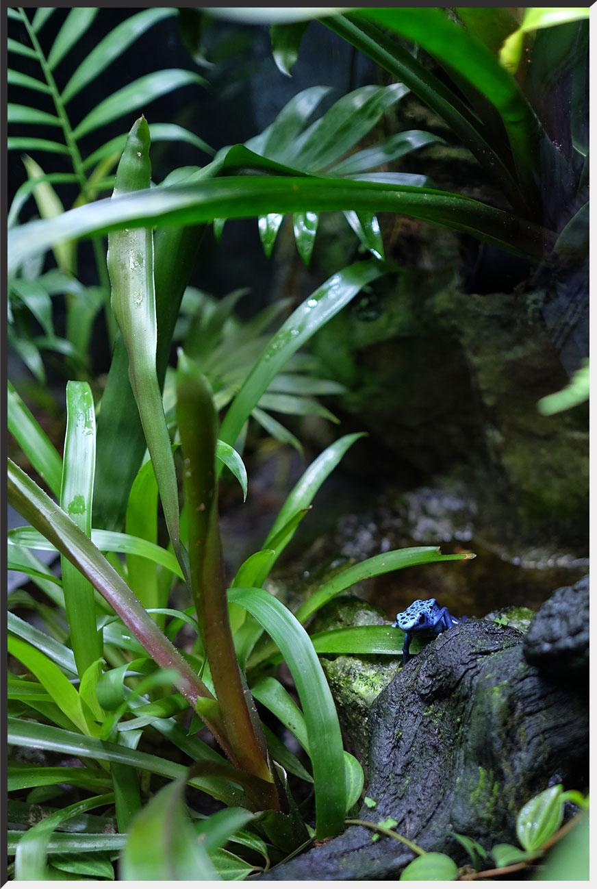 """""""aquarium_140404_06.jpg"""""""